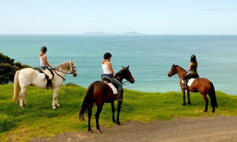sandy bay horse trekking